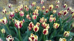 Spring displays