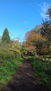 Uppingham School arboretum